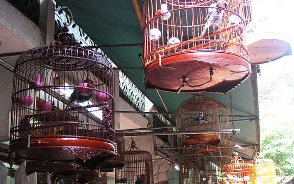 hong-kong-bird-market