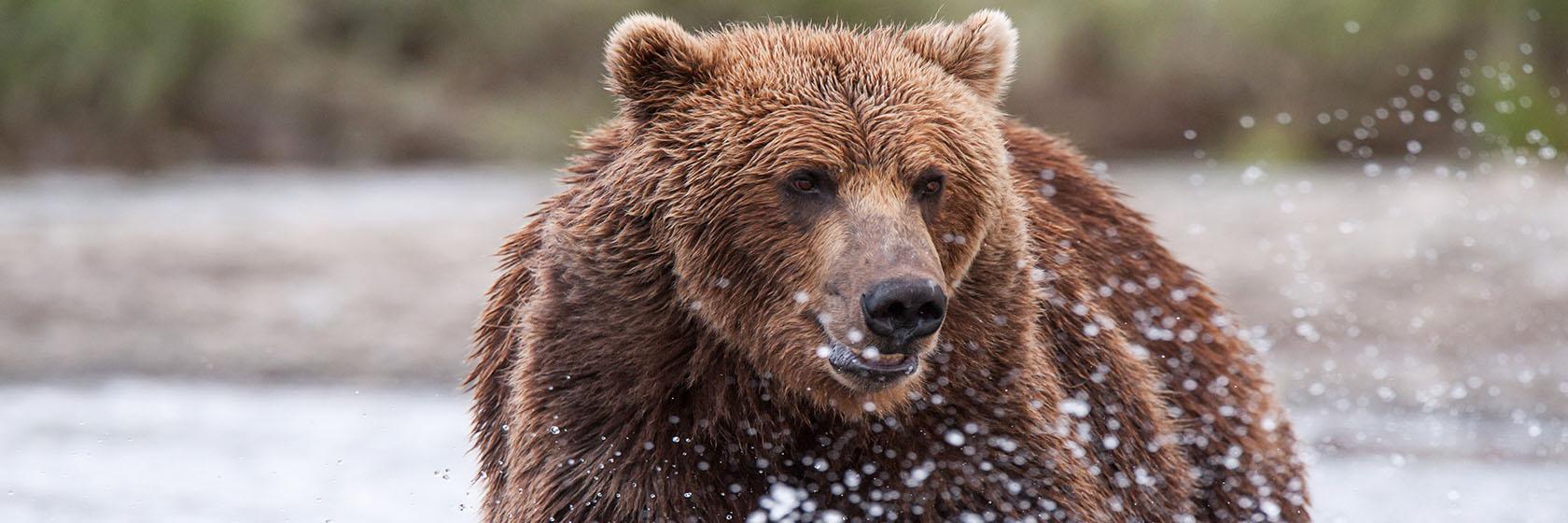 Alaskan Family Adventure with Abercrombie & Kent