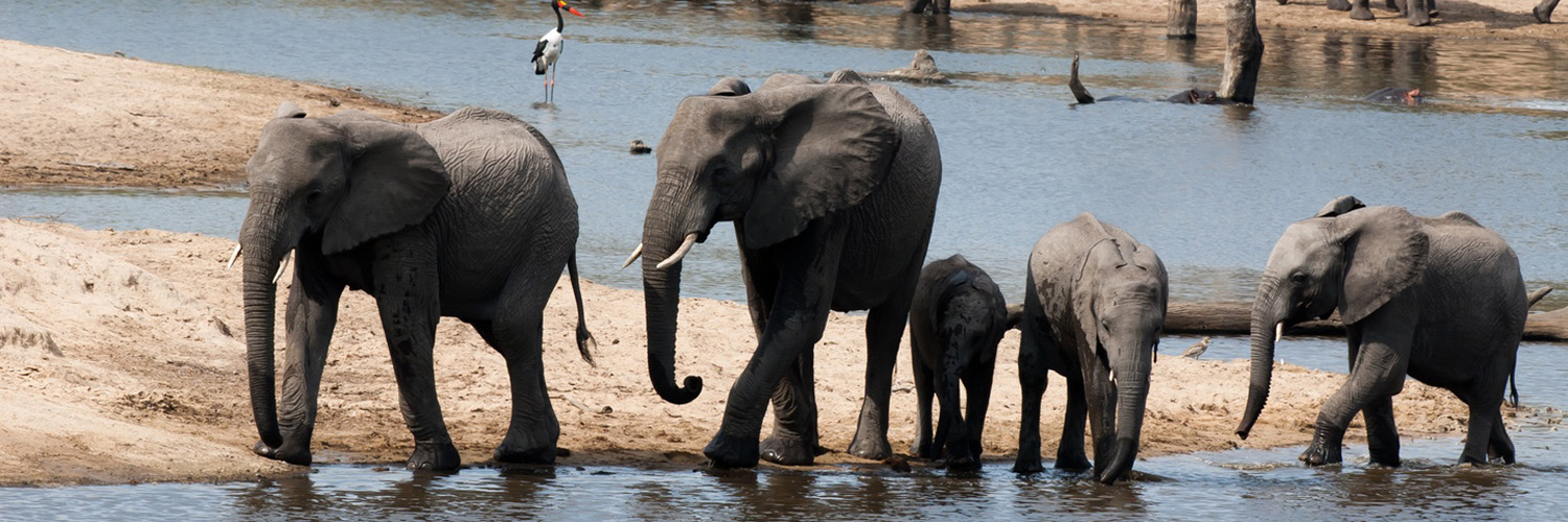 Luxury-Travel-Destination-South-Africa-Elephants-Water