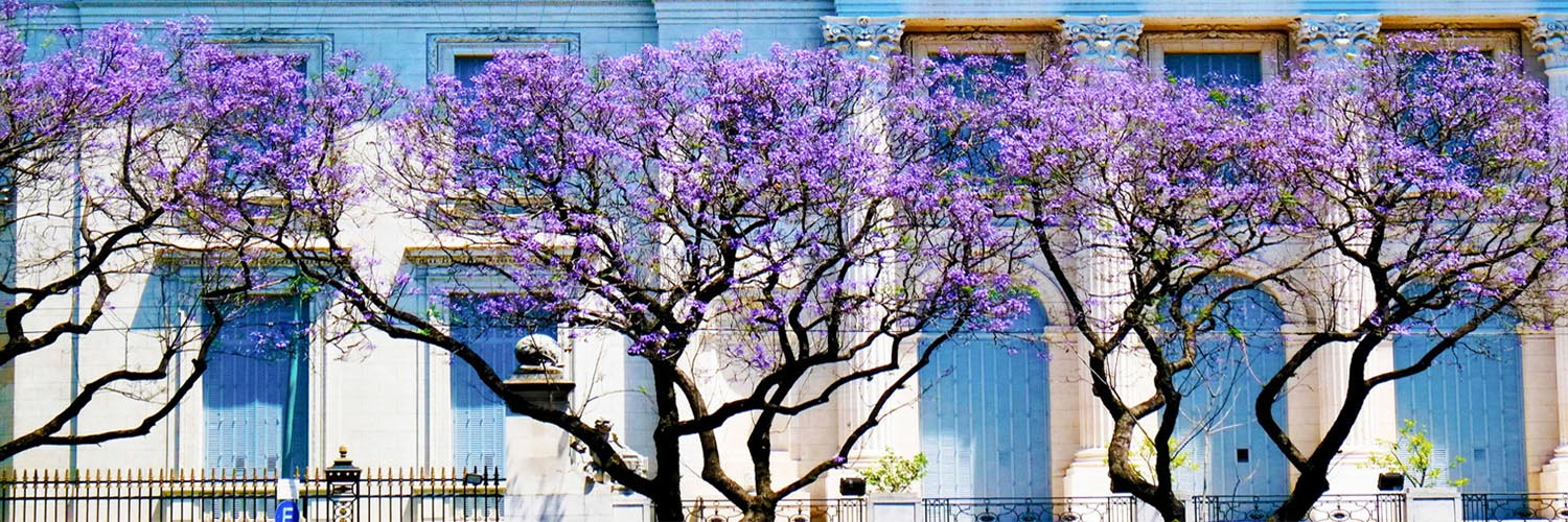 buenos-aires-to-brazil-13-days-with-abercrombie-and-kent-trees