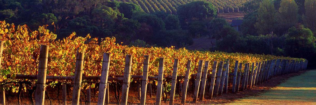 cape-lodge-margaret-river-vineyards