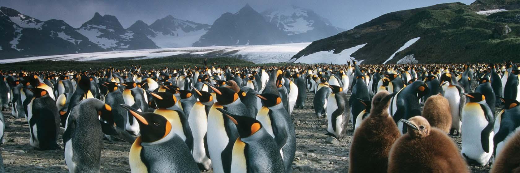 Antarctica, South Georgia & the Falkland Islands 2021 with A&K